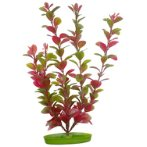 RED LUDWIGIA - LARGE 12