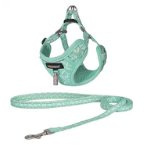 DOG HARNESS WITH LEASH (TURQUOISE) (10mmx22-32cm) BWDG3793